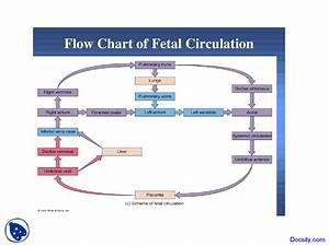 Fetal Circulation In Flow Chart