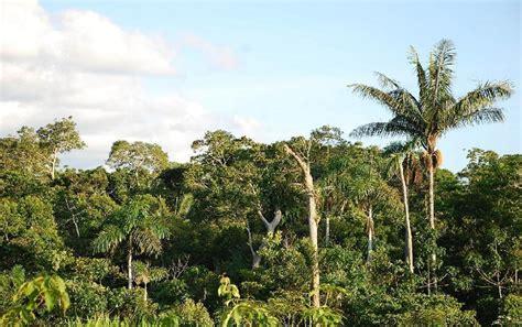 Filesouth American Jungle Photographjpg  Wikimedia Commons