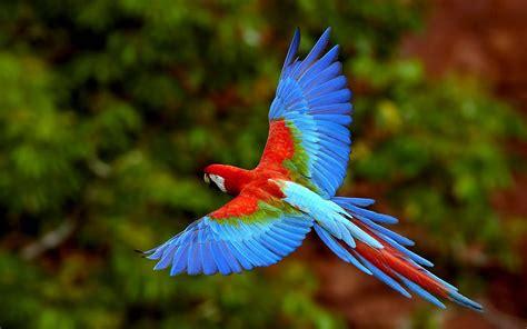 macaw bird wallpapers parrots wallpapers