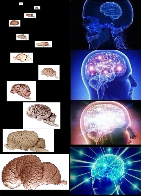 Brain Meme Template Logical Conclusion Expanding Brain Your Meme