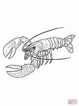 Lobster Coloring Pages Maine Spiny Outline Drawing Colouring Printable Clip Line Flower Lobsters Template Supercoloring Dot Draw Drawings Main Super sketch template