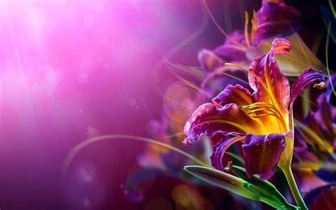 cool abstract flower wallpaper hd pixelstalk