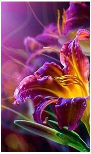 Cool abstract flower   PixelsTalk.Net