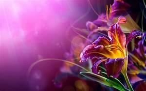 Violet Flower Wallpapers 25399 2560x1600 px ~ HDWallSource.com