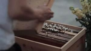 Was Vertreibt Bienen : wie man bienen in hong kong z chtet was is hier eigentlich los unterhaltung kultur ~ Eleganceandgraceweddings.com Haus und Dekorationen