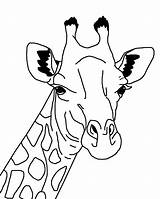 Coloring Giraffes Giraffe Pages Baby Again Bar Looking Case Don sketch template