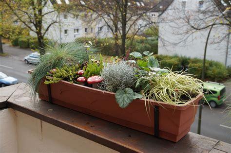 Herbst Winterbepflanzung Garten by Herbst Winterbepflanzung 2013 Green Planet