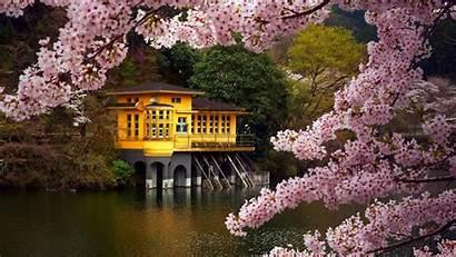 Japanese Street Springtime Blossom Cherry Japan Spring