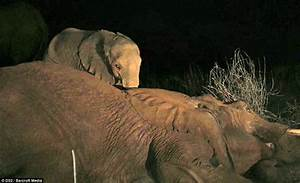This Baby Elephant Watched His Mother Die… What He Did ...