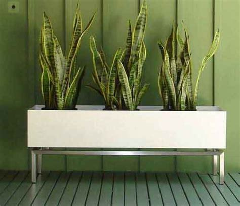 modern plants planters the plant and planter box designs on pinterest