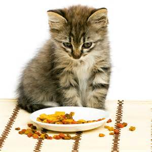 best cat food for kittens cat food out the best one rulzz media