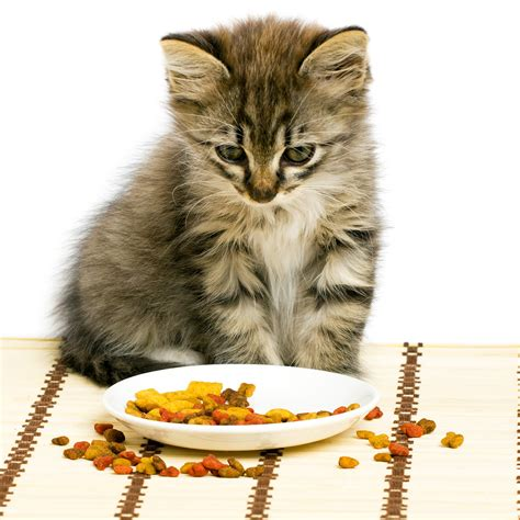 Cat Food Pick Out The Best One  Rulzz Media Blog