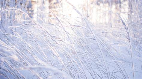 wallpaper meadows   wallpaper  snow frost
