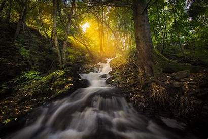 Sunbeam Nature Forest Trees Reflection Background 1080p