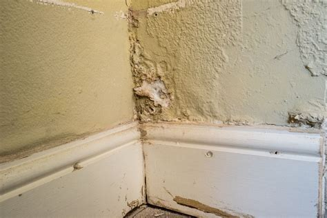 damp   home damp proof north east