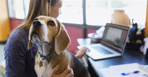 firms allowing dogs   pets   office