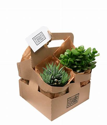 Bright Plant Plants Pack Garden Cgc Gift