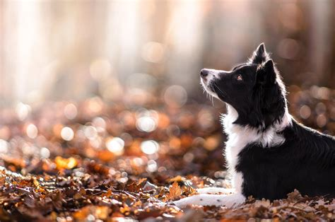 Fall Animal Wallpaper - animals depth of field nature leaves fall