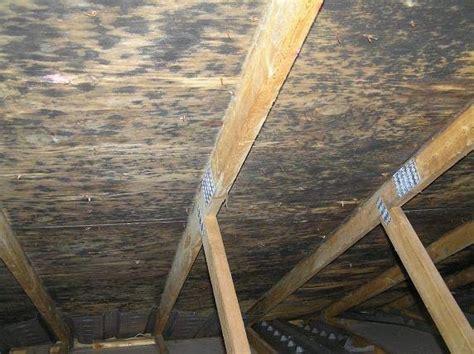 black mold  attic prevention  removal  attic mold
