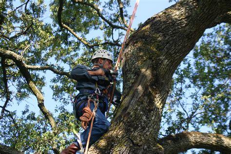 tree problems diagnosis top 28 tree problems diagnosis cares4trees tree services corpus christi tx phone tree
