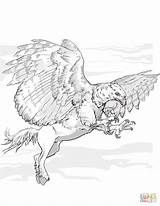 Coloring Hippogriff Pages Griffin Dnd Centaur Fantasy Printable Griffon Dragons Dungeons Drawing Dd Styles Drawings sketch template