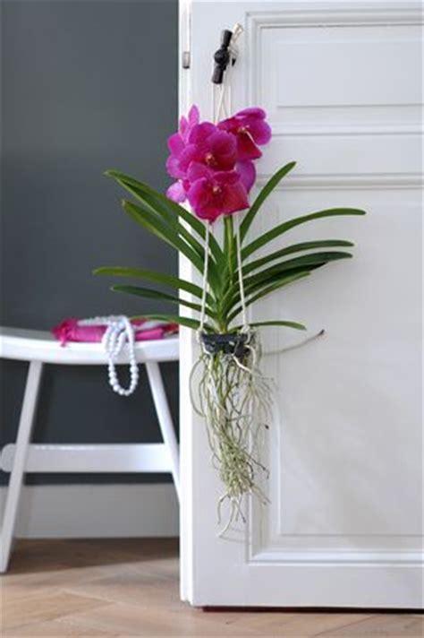 1000 id 233 es sur le th 232 me orchid terrarium sur terrarium orchid 233 es et plantes de