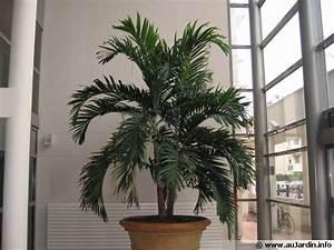 La Culture Des Plantes D39intrieur En Hiver