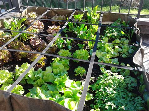 come fare l orto sul terrazzo orto sul terrazzo