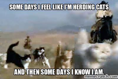 Herding Cats Meme - herding cats