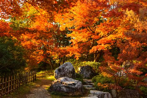 2019 Autumn Forecast: Best Places to See Autumn Leaves in ...