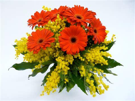 fiori e mimose mazzo di gerbere rosse e mimosa mimosa a consegna fiori