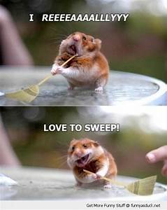 Funny Cute Baby Hamsters | funny cute animals pictures ...