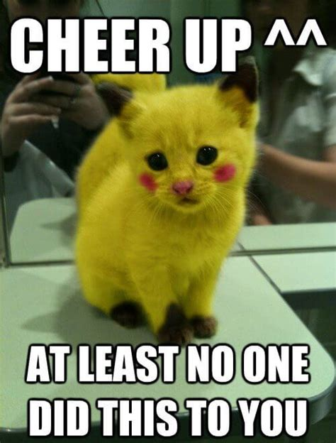 Cheer Up Cat Meme - top 25 cheer up meme s that ll instantly lift your mood