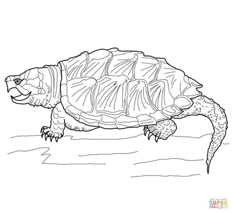 Alligator Snapping Turtle Coloring Page Free Printable