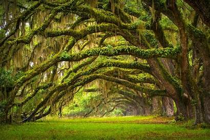Trees Tree Nature Landscape Oak Forest Grass