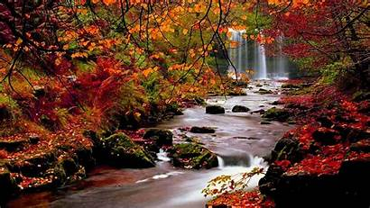 Fall Screensavers Scenes Autumn Backgrounds Trees