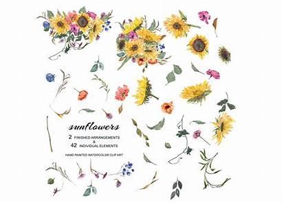 Sunflower Watercolor Painted Clipart Hand Arrangements Separate