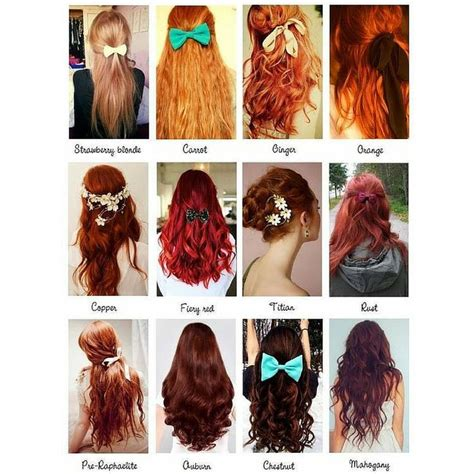 types of hair color best 25 hair type chart ideas on hair