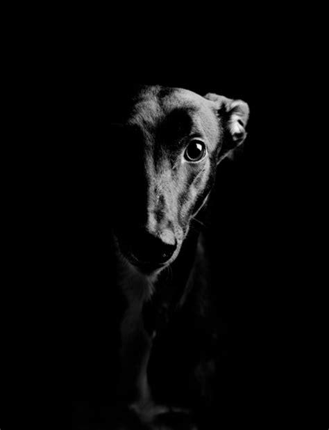 dog art sc portrait photography
