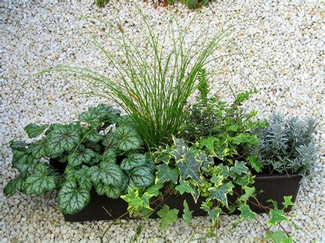 Bepflanzter Balkonkasten 60 Cm Wintergrün Pflanzen