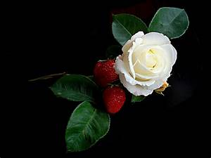 Red Roses With One White Rose Meaning | www.pixshark.com ...