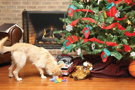 holiday pet proofing tips petsafe 174 articles