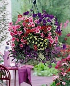 Blumenkästen Bepflanzen Ideen : alles sch ne dieser welt farben des gl cks garten balkon blumen und balkongarten ~ Eleganceandgraceweddings.com Haus und Dekorationen