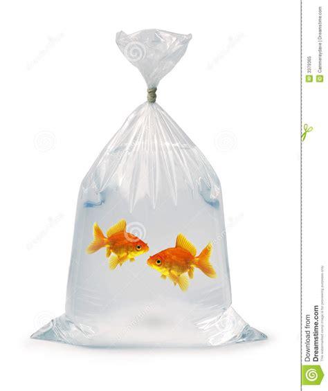goldfish   bag royalty  stock photo image