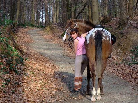 mon bureau et moi moi et mon cheval dans la foret de soignes picture of