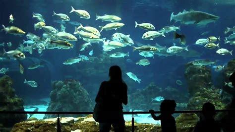 l aquarium de club aquarium de barcelona 2010