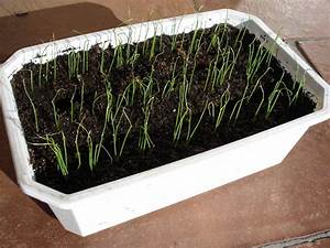 Planter Des Choux Fleurs : semis d 39 int rieur 9 questions que vous m 39 avez pos es ~ Melissatoandfro.com Idées de Décoration