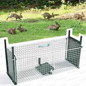 Comment Pieger Une Fouine : cage piege lapin double entr e traitement anti insectes et souris ~ Medecine-chirurgie-esthetiques.com Avis de Voitures