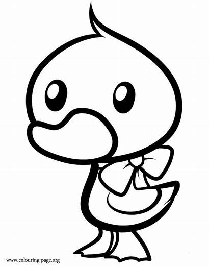 Duckling Coloring Duck Wearing Ribbon Pages Colouring