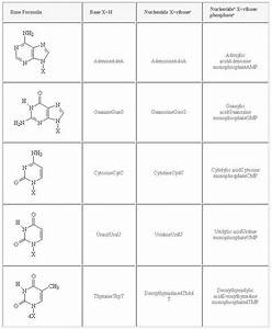Nucleic Acids  Nucleotides  And Nucleosides